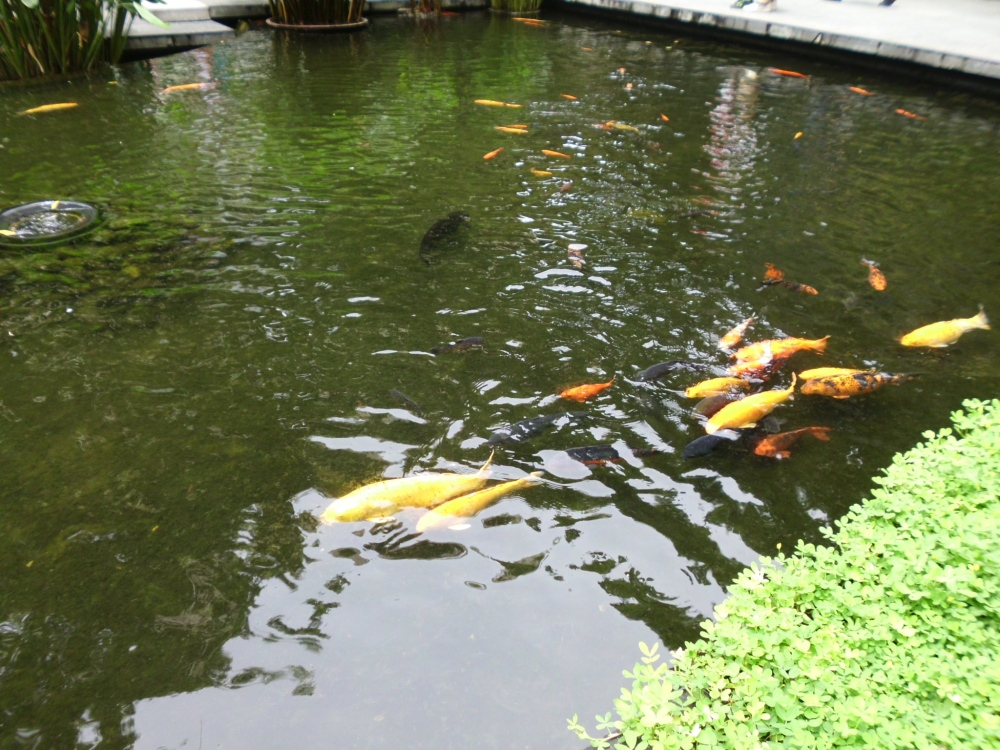 A relaxing view of the fish pond.